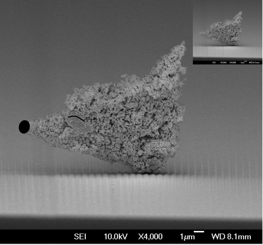 Nano particle fox.png