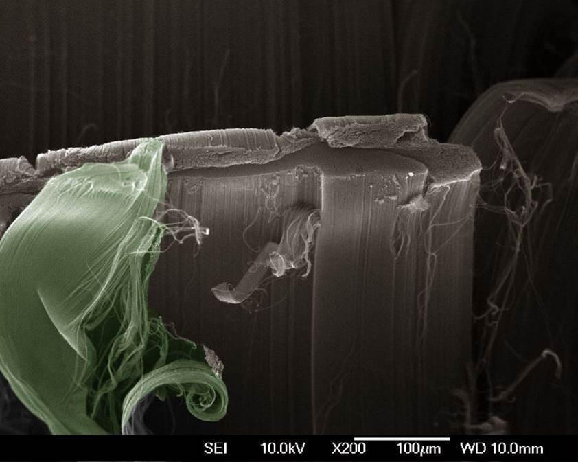 nanochameleon.jpg